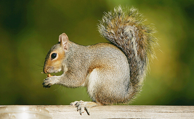 Eddy Hall Feeds Squirrels In St James Park